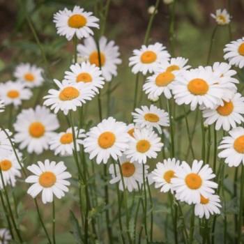Bijoux bohème, collection Daisy, un mélange de fleurs en tissu et plaqué or par Joanna Calla