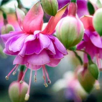 Bijoux bohème, collection Fuchsia, un mélange de fleurs en tissu et plaqué or par Joanna Calla