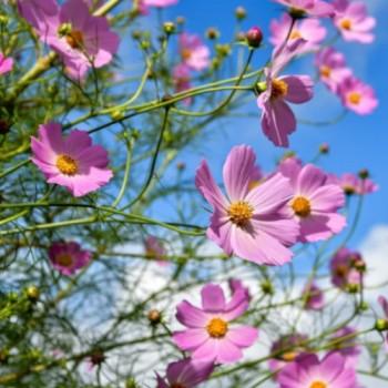 Bijoux bohème, collection Viridiana, un mélange de fleurs en argile polymère et argent, Joanna Calla